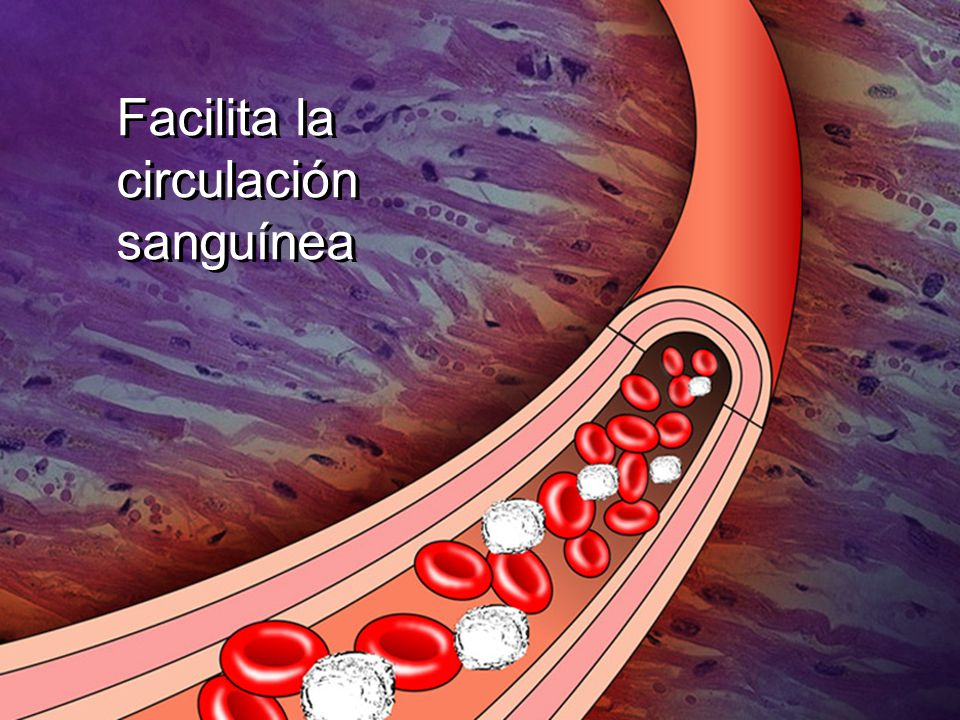 Facilita la circulación sanguínea