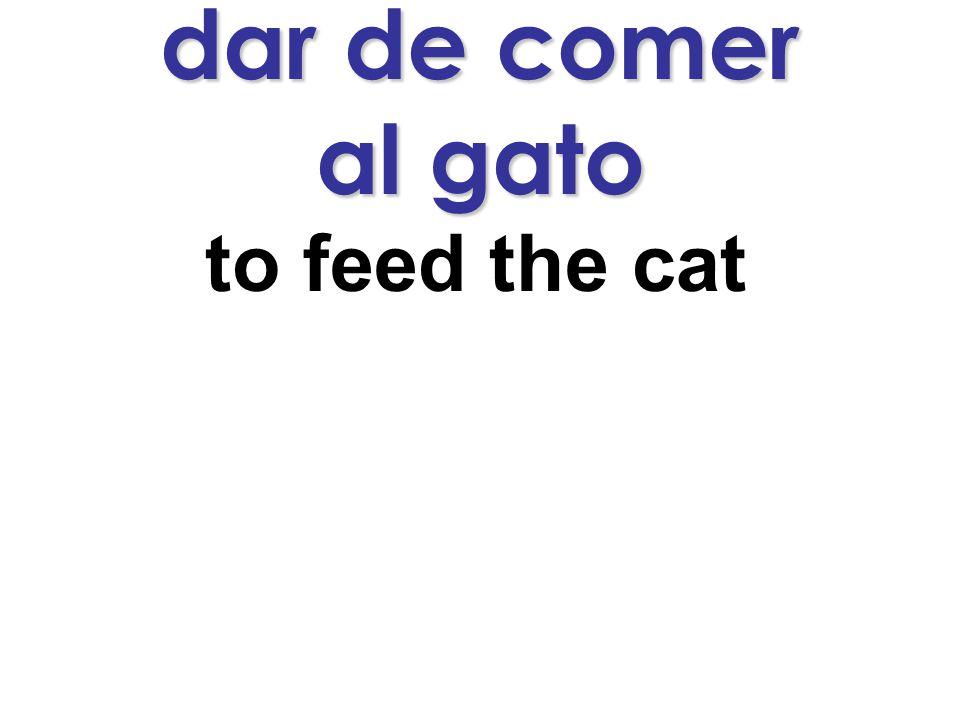 dar de comer al gato to feed the cat
