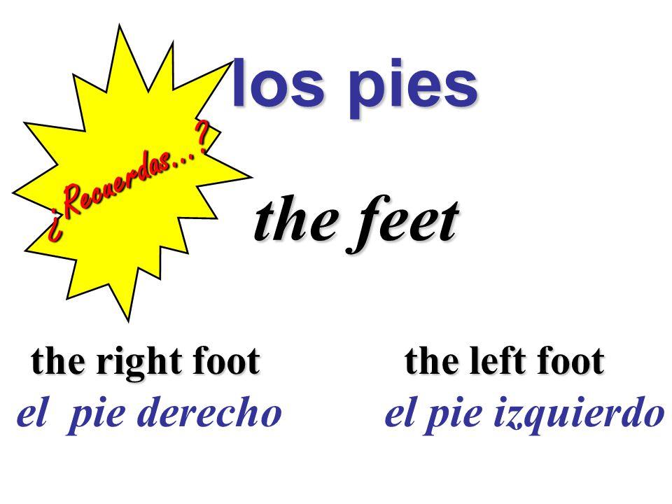los pies los pies the feet the feet the right foot the left foot el pie derecho el pie izquierdo ¿Recuerdas…
