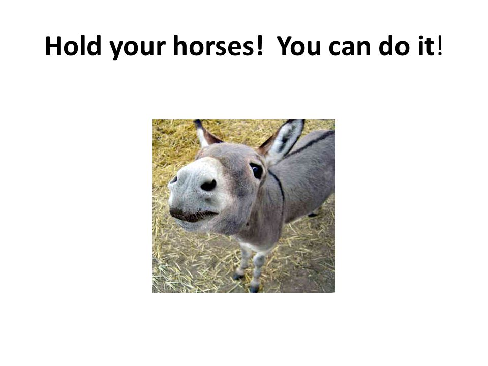 Hold your horses! You can do it!