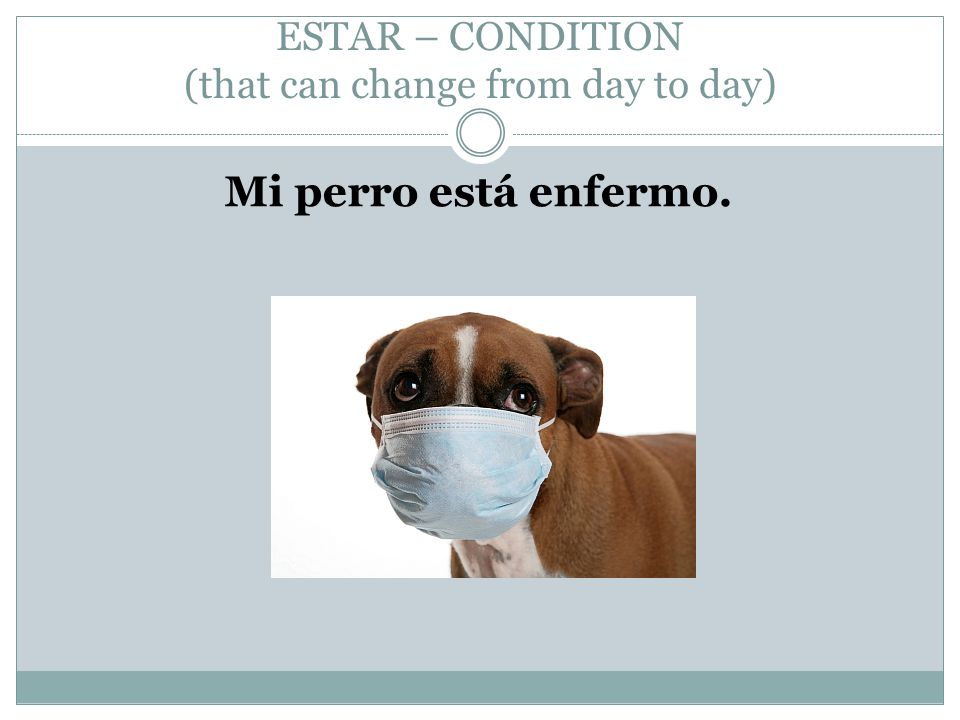 ESTAR – CONDITION (that can change from day to day) Mi perro está enfermo.