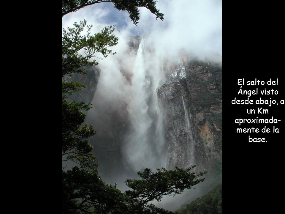 El salto del Ángel Nombre autóctono : Kerepakupay Vená El salto del Ángel es la más alta caída de agua dulce del mundo con una altura de 979 metros y una caída ininterrumpida de 807 metros.