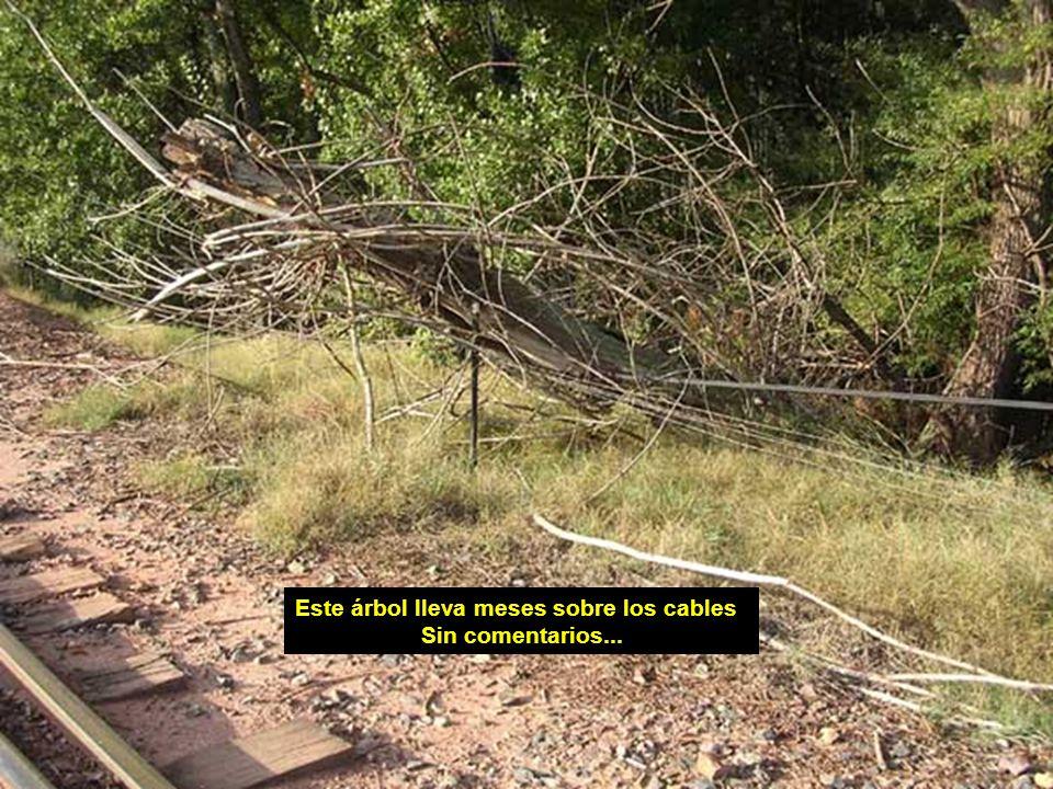 Este árbol lleva meses sobre los cables Sin comentarios...