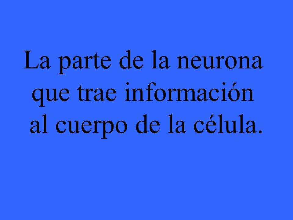 ¿Qué es una neurona