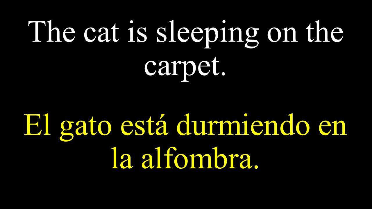 The cat is sleeping on the carpet. El gato está durmiendo en la alfombra.