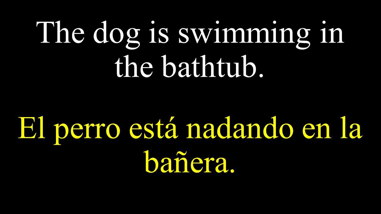 The dog is swimming in the bathtub. El perro está nadando en la bañera.