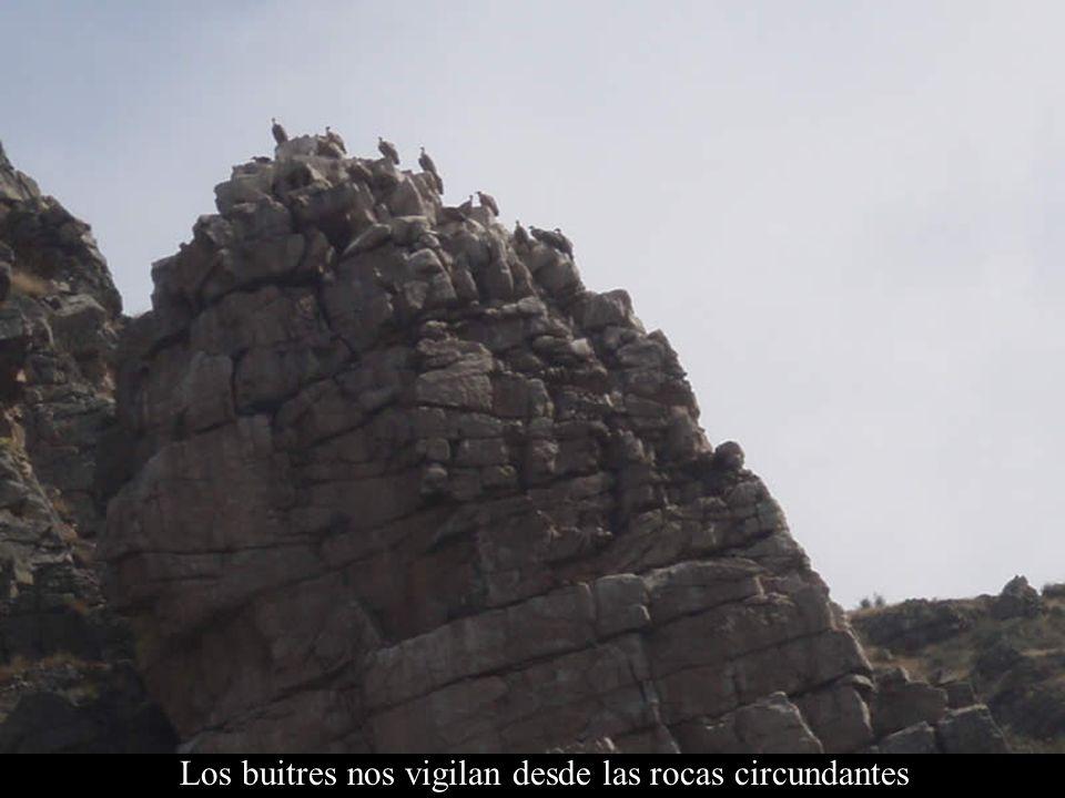 Los buitres nos vigilan desde las rocas circundantes