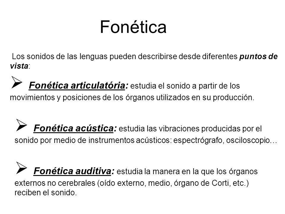 Fonética Los sonidos de las lenguas pueden describirse desde diferentes puntos de vista:  Fonética articulatória: estudia el sonido a partir de los movimientos y posiciones de los órganos utilizados en su producción.