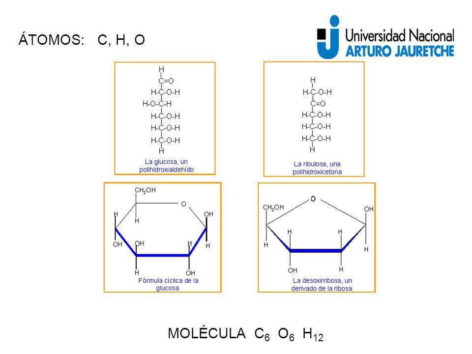 ÁTOMOS: C, H, O MOLÉCULA C 6 O 6 H 12
