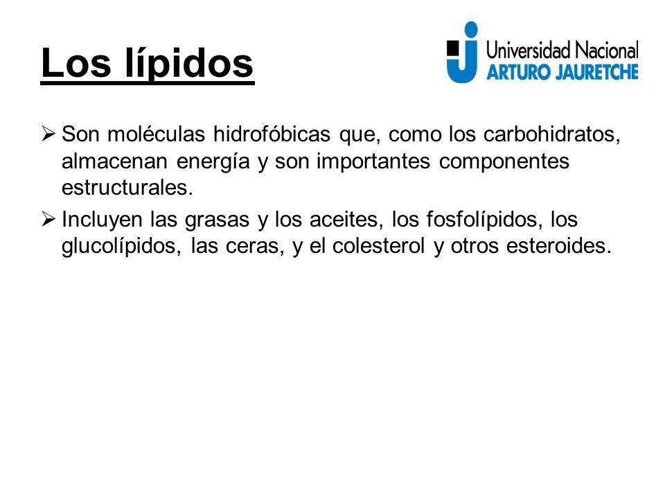 Los lípidos  Son moléculas hidrofóbicas que, como los carbohidratos, almacenan energía y son importantes componentes estructurales.