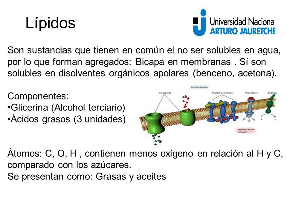 Son sustancias que tienen en común el no ser solubles en agua, por lo que forman agregados: Bicapa en membranas.