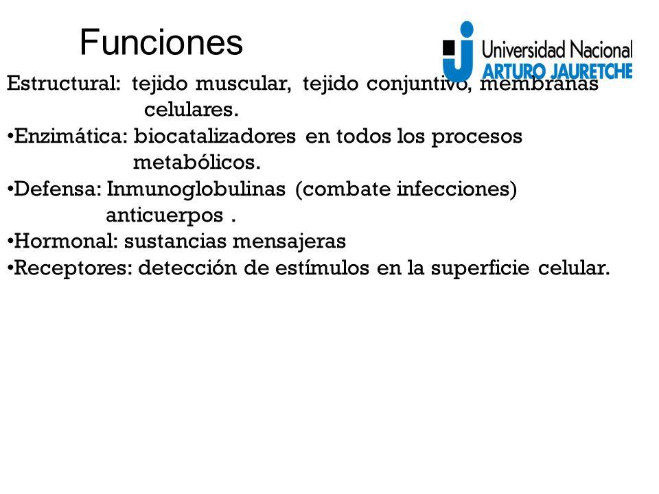 Estructural: tejido muscular, tejido conjuntivo, membranas celulares.