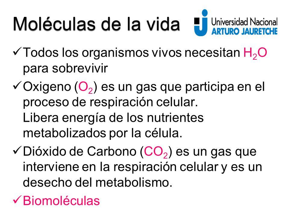Todos los organismos vivos necesitan H 2 O para sobrevivir Oxigeno (O 2 ) es un gas que participa en el proceso de respiración celular.
