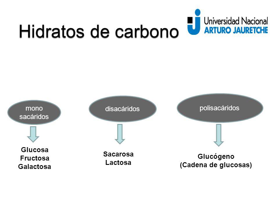mono sacáridos disacáridos polisacáridos Glucosa Fructosa Galactosa Sacarosa Lactosa Glucógeno (Cadena de glucosas)