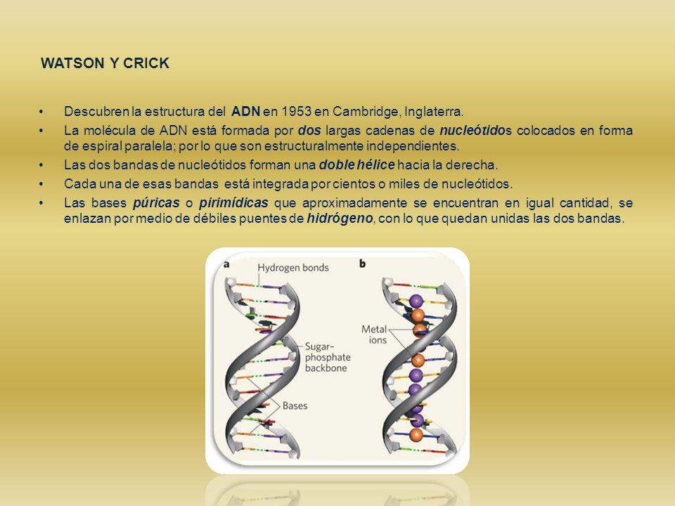 Resultado de imagen para CAMBRIDGE ADN
