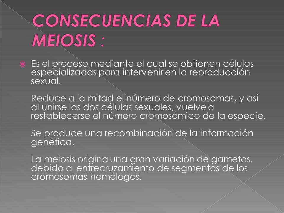  Es el proceso mediante el cual se obtienen células especializadas para intervenir en la reproducción sexual.