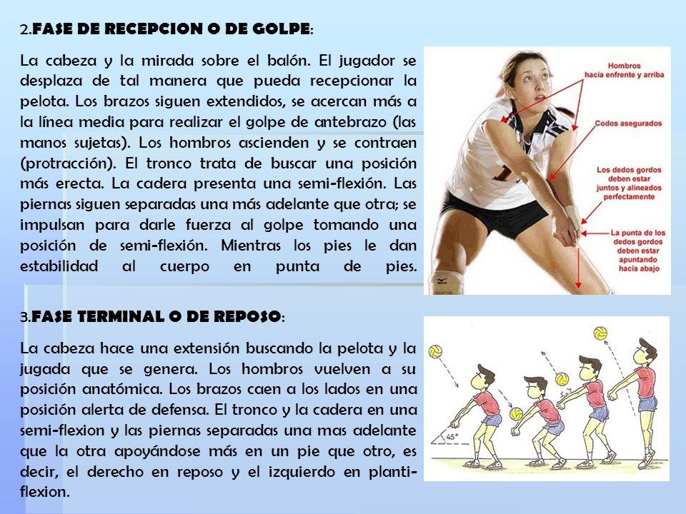 2. FASE DE RECEPCION O DE GOLPE : La cabeza y la mirada sobre el balón. El jugador se desplaza de tal manera que pueda recepcionar la pelota. Los braz