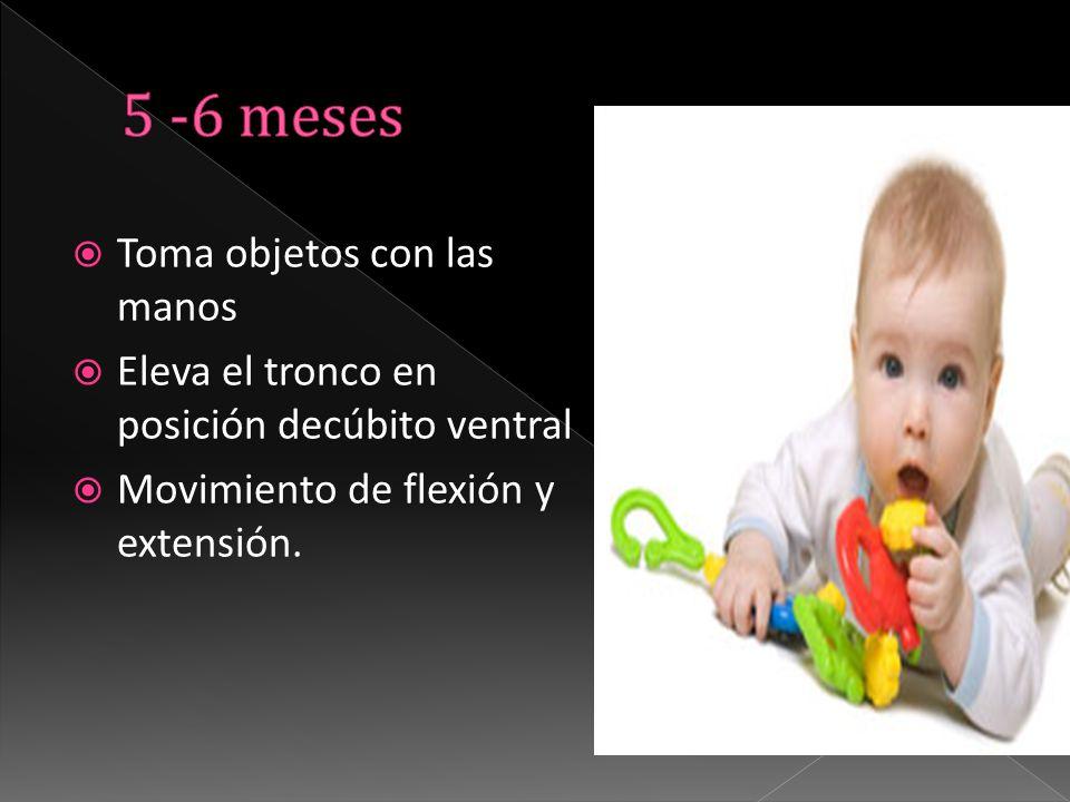  Toma objetos con las manos  Eleva el tronco en posición decúbito ventral  Movimiento de flexión y extensión.