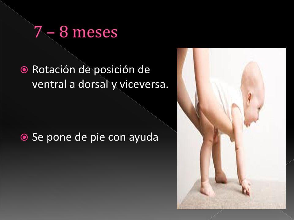  Rotación de posición de ventral a dorsal y viceversa.  Se pone de pie con ayuda