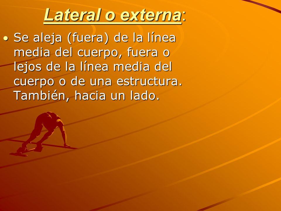 Lateral o externa: Se aleja (fuera) de la línea media del cuerpo, fuera o lejos de la línea media del cuerpo o de una estructura.