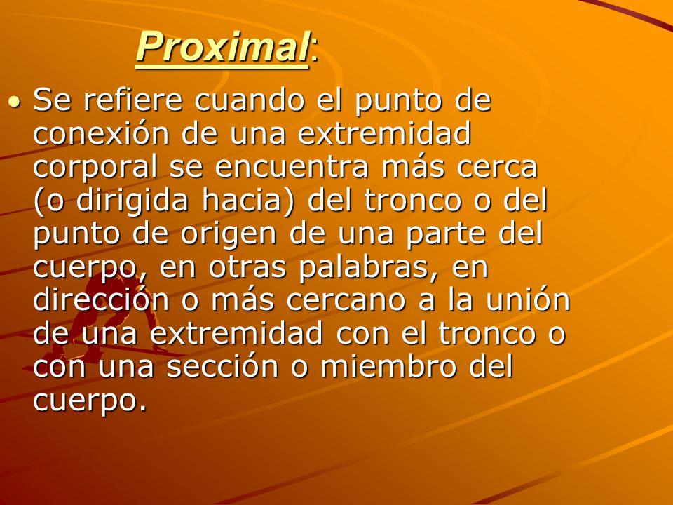 Proximal: Se refiere cuando el punto de conexión de una extremidad corporal se encuentra más cerca (o dirigida hacia) del tronco o del punto de origen de una parte del cuerpo, en otras palabras, en dirección o más cercano a la unión de una extremidad con el tronco o con una sección o miembro del cuerpo.