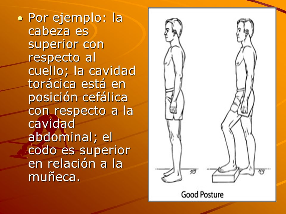 Por ejemplo: la cabeza es superior con respecto al cuello; la cavidad torácica está en posición cefálica con respecto a la cavidad abdominal; el codo es superior en relación a la muñeca.