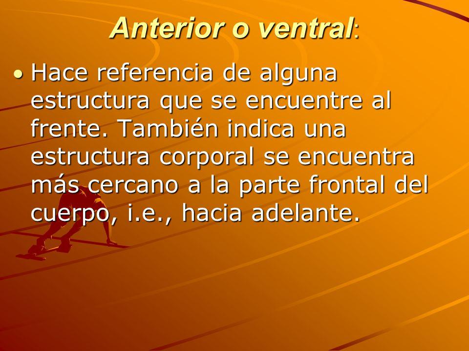 Ejemplos: las manos se encuentran en la pared toráxico anterior; el esternón está en sentido ventral con respecto al corazón; el esternón se encuentran anterior al corazón.