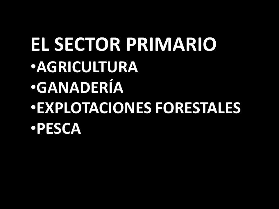 EL SECTOR PRIMARIO AGRICULTURA GANADERÍA EXPLOTACIONES FORESTALES PESCA