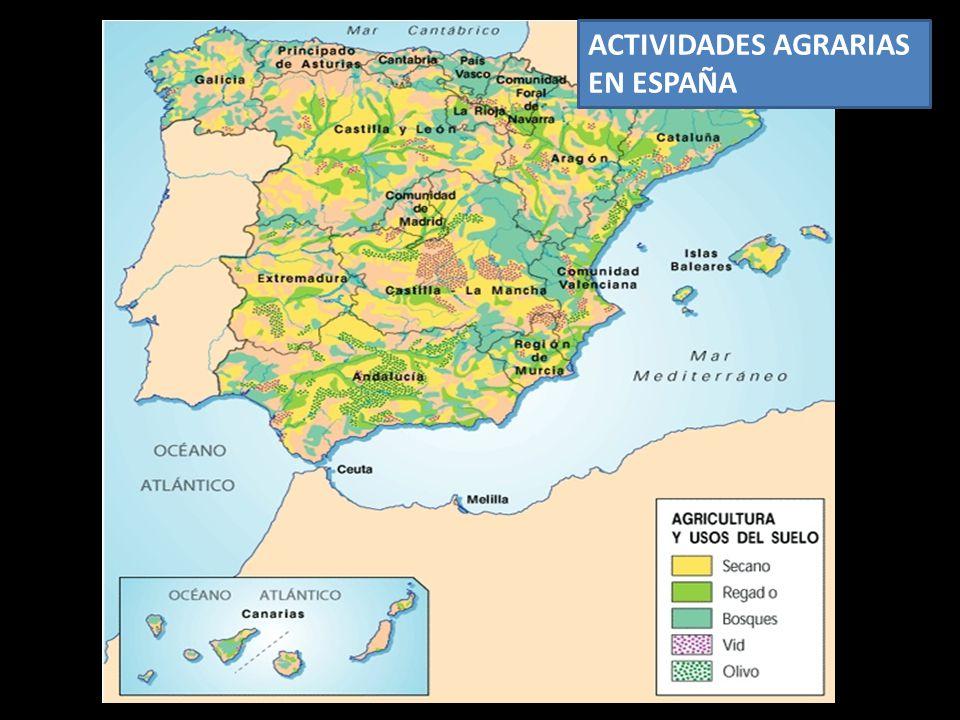 ACTIVIDADES AGRARIAS EN ESPAÑA
