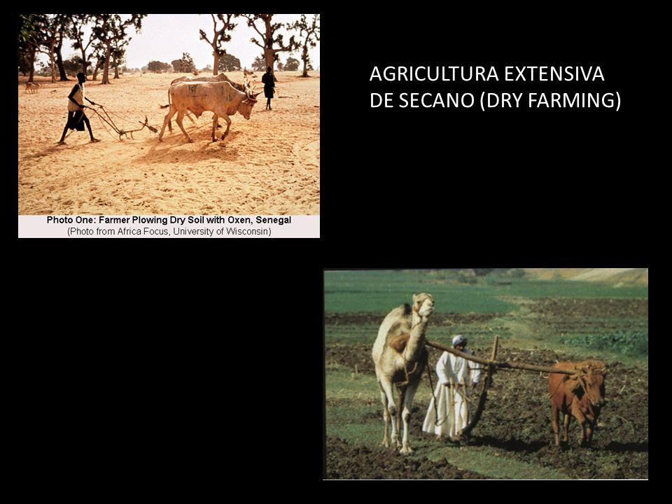AGRICULTURA EXTENSIVA DE SECANO (DRY FARMING)