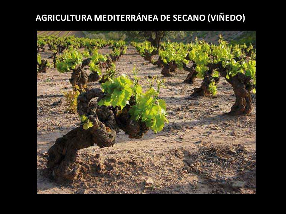 AGRICULTURA MEDITERRÁNEA DE SECANO (VIÑEDO)