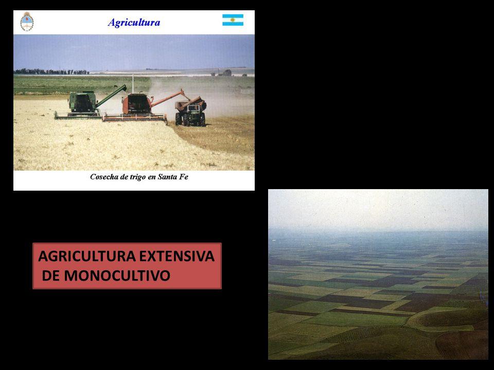 AGRICULTURA EXTENSIVA DE MONOCULTIVO