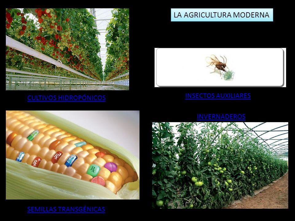LA AGRICULTURA MODERNA INSECTOS AUXILIARES CULTIVOS HIDROPÓNICOS SEMILLAS TRANSGÉNICAS INVERNADEROS