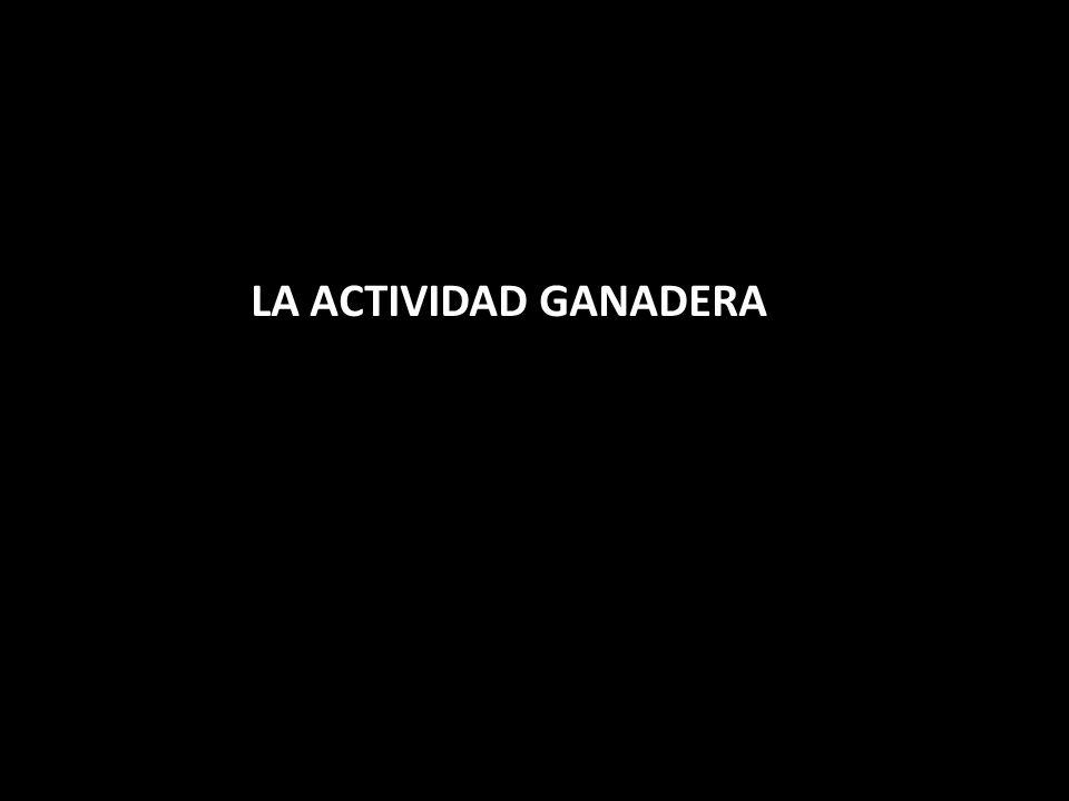 LA ACTIVIDAD GANADERA