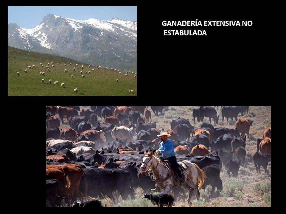 GANADERÍA EXTENSIVA NO ESTABULADA