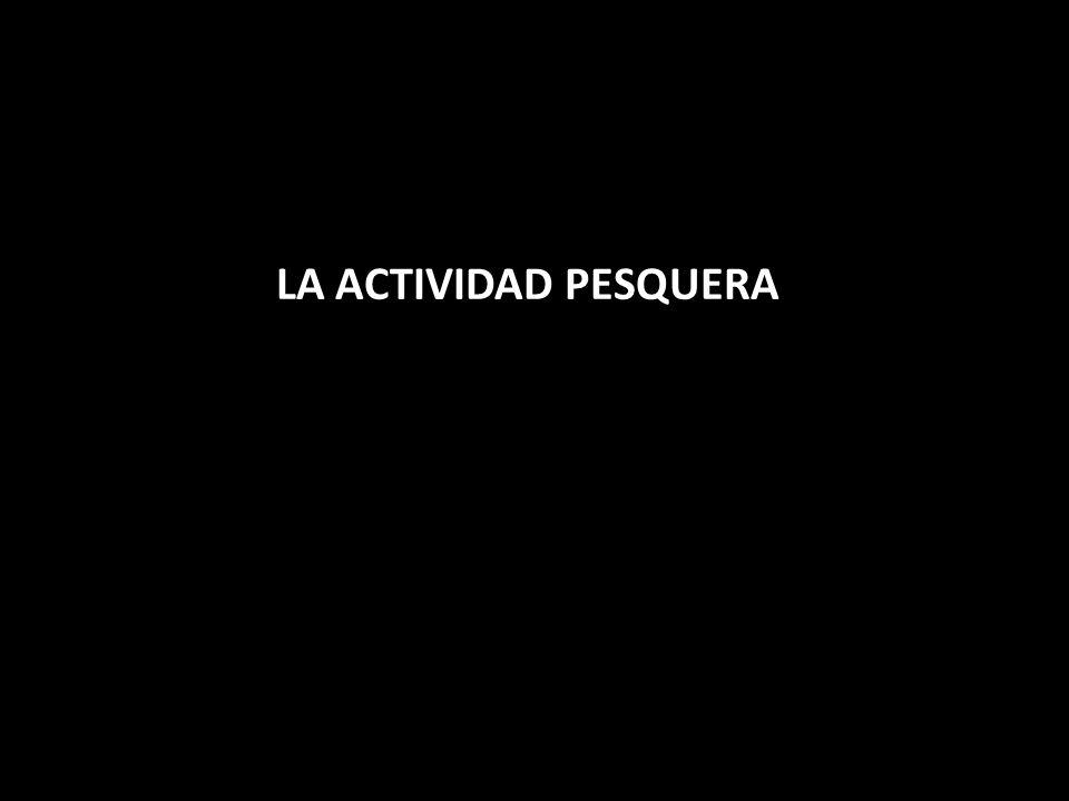 LA ACTIVIDAD PESQUERA