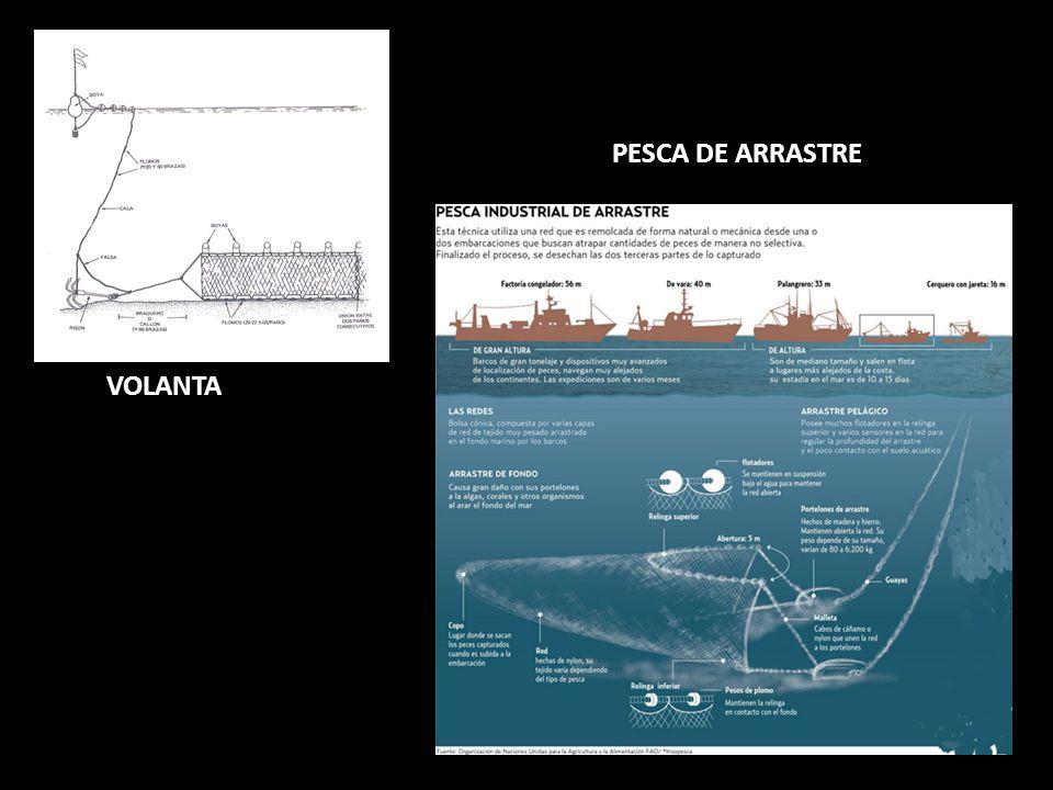 PESCA DE ARRASTRE VOLANTA