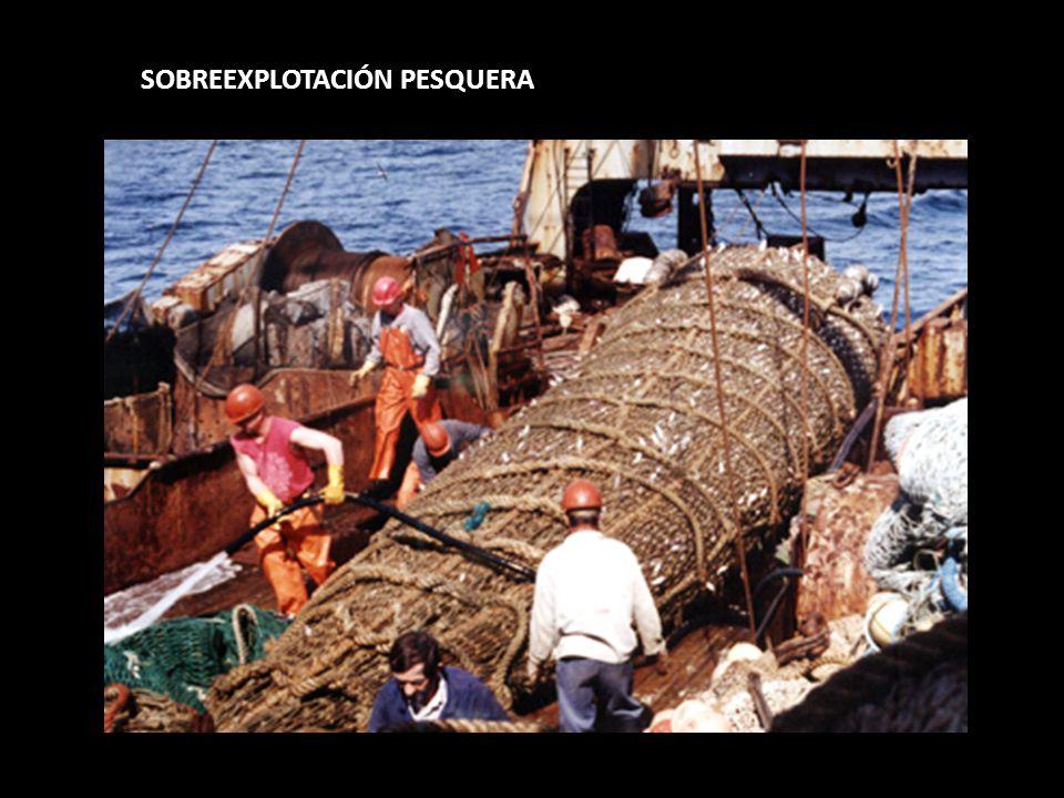 SOBREEXPLOTACIÓN PESQUERA