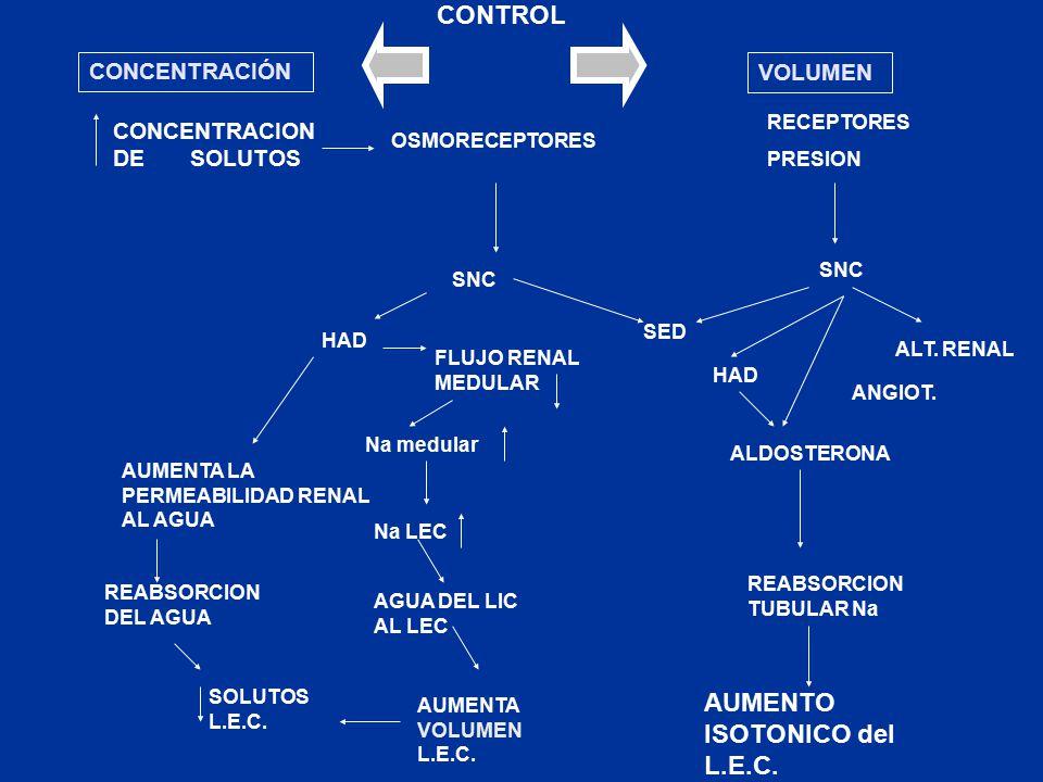 CONCENTRACION DE SOLUTOS OSMORECEPTORES SNC HAD FLUJO RENAL MEDULAR Na medular Na LEC AGUA DEL LIC AL LEC AUMENTA VOLUMEN L.E.C.
