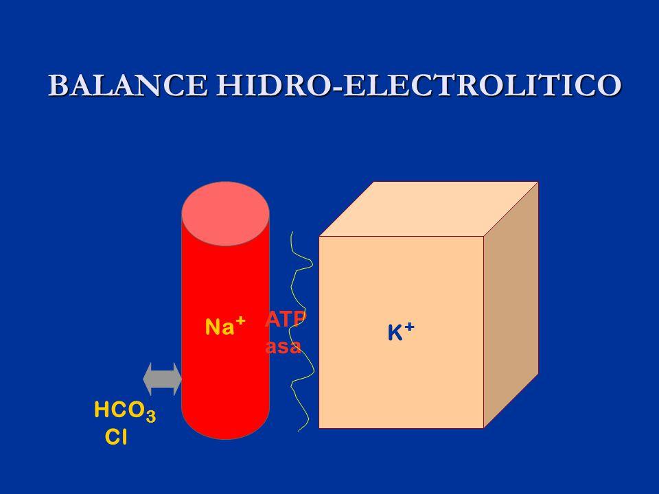 BALANCE HIDRO-ELECTROLITICO BALANCE HIDRO-ELECTROLITICO Na + K+K+ ATP asa HCO 3 Cl