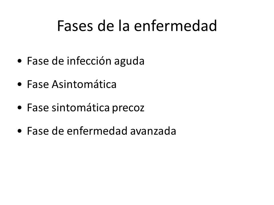 Fases de la enfermedad Fase de infección aguda Fase Asintomática Fase sintomática precoz Fase de enfermedad avanzada