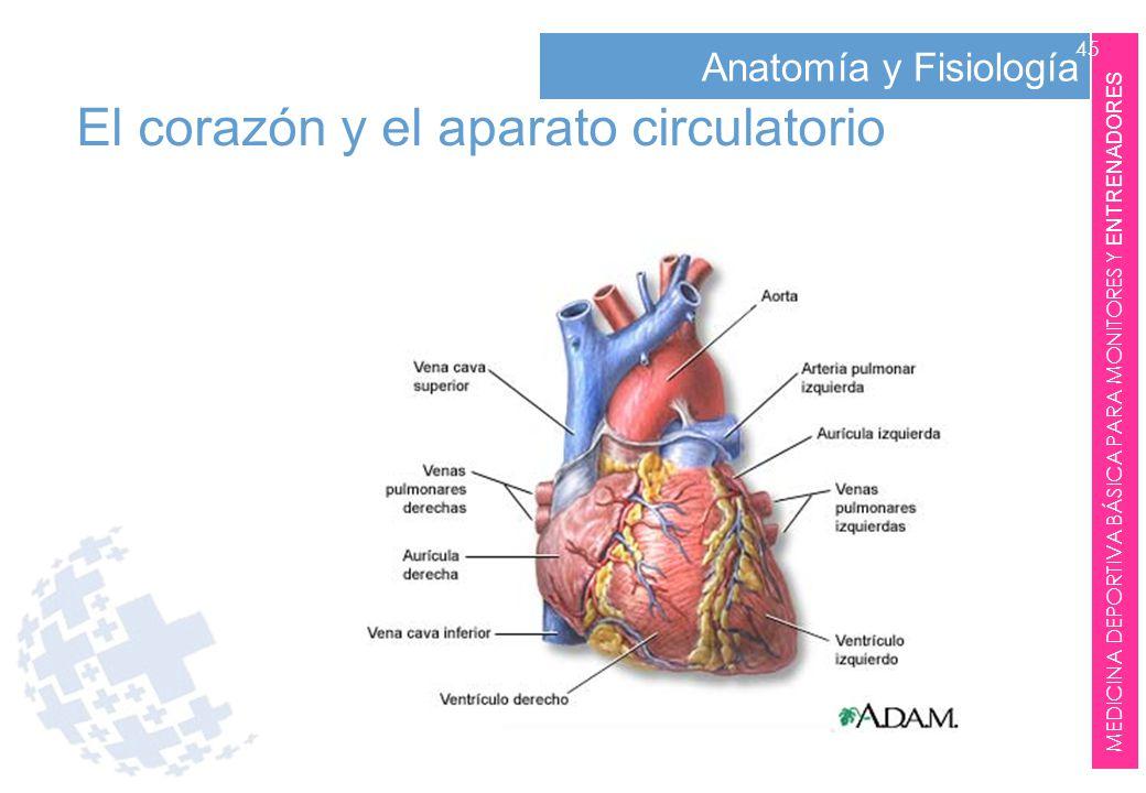 Fantástico Anatomía Y Fisiología Del Corazón Elaboración - Imágenes ...