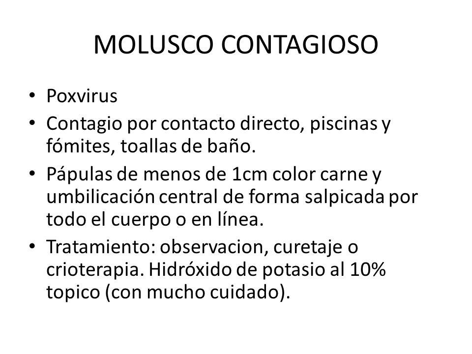 MOLUSCO CONTAGIOSO Poxvirus Contagio por contacto directo, piscinas y fómites, toallas de baño. Pápulas de menos de 1cm color carne y umbilicación cen