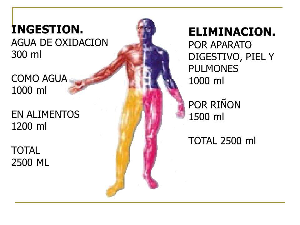 INGESTION. AGUA DE OXIDACION 300 ml COMO AGUA 1000 ml EN ALIMENTOS 1200 ml TOTAL 2500 ML ELIMINACION. POR APARATO DIGESTIVO, PIEL Y PULMONES 1000 ml P