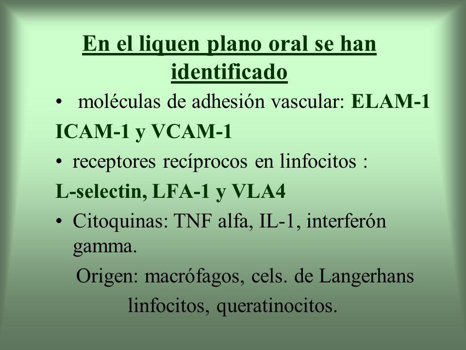 Los queratinocitos también presentan moléculas de adhesión vasc.
