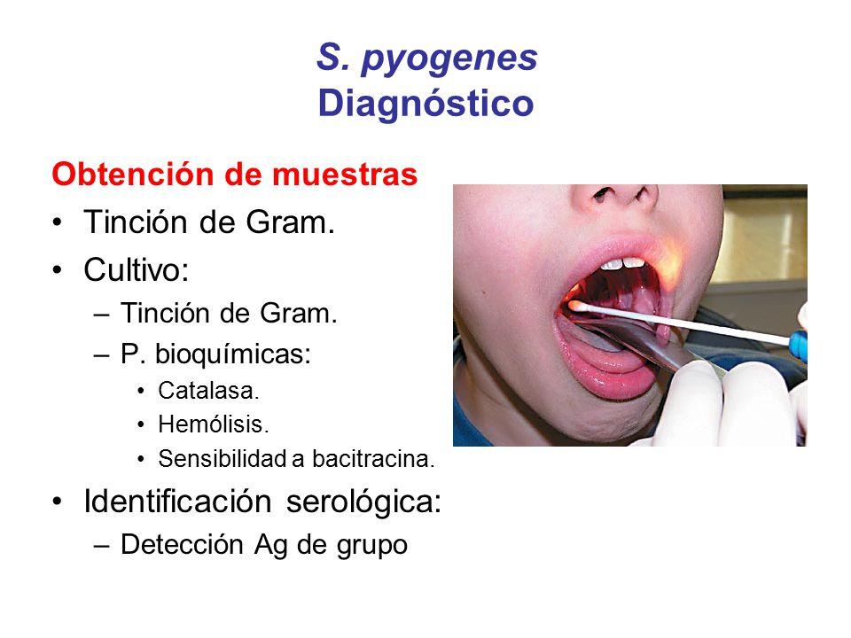 S. pyogenes Diagnóstico Obtención de muestras Tinción de Gram. Cultivo: –Tinción de Gram. –P. bioquímicas: Catalasa. Hemólisis. Sensibilidad a bacitra