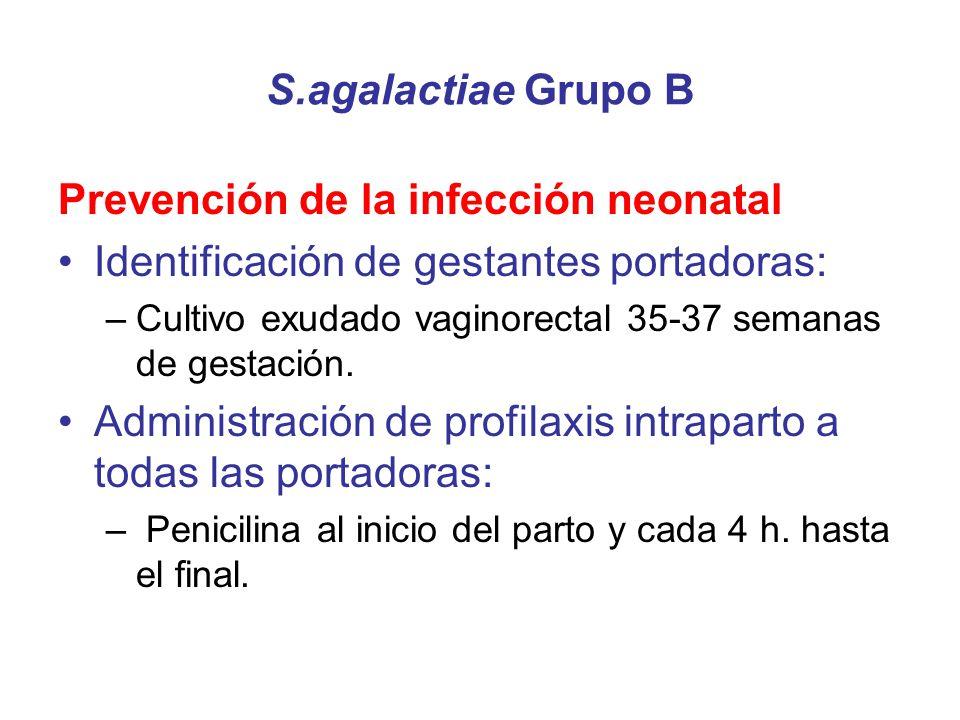 S.agalactiae Grupo B Prevención de la infección neonatal Identificación de gestantes portadoras: –Cultivo exudado vaginorectal 35-37 semanas de gestac