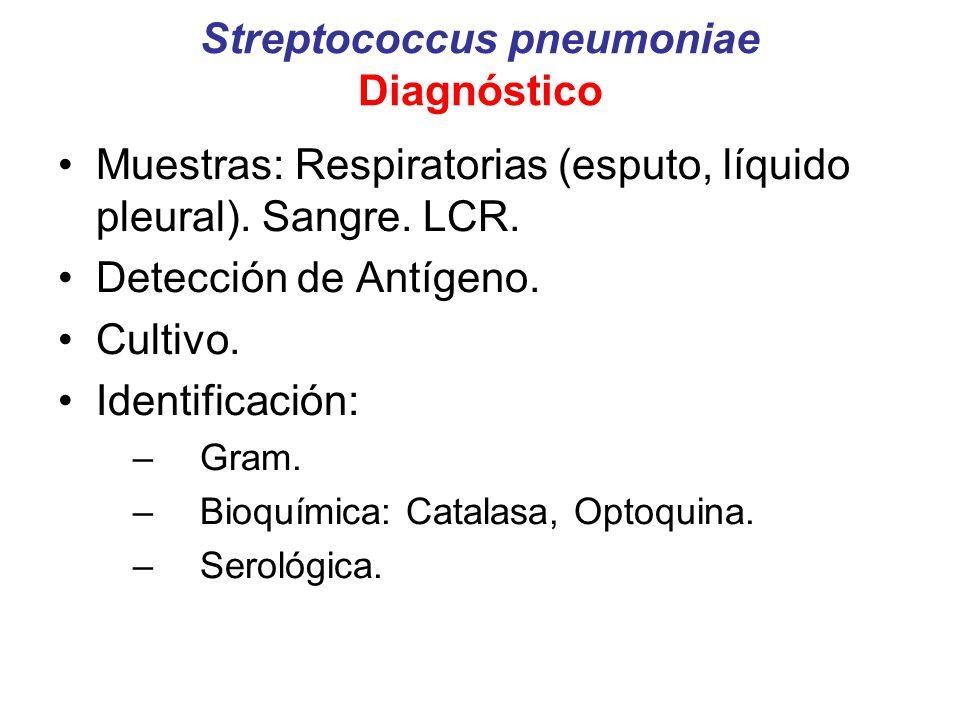 Streptococcus pneumoniae Diagnóstico Muestras: Respiratorias (esputo, líquido pleural). Sangre. LCR. Detección de Antígeno. Cultivo. Identificación: –