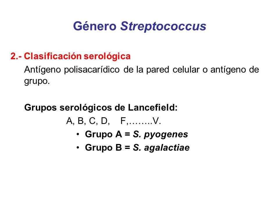 Género Streptococcus 2.- Clasificación serológica Antígeno polisacarídico de la pared celular o antígeno de grupo. Grupos serológicos de Lancefield: A