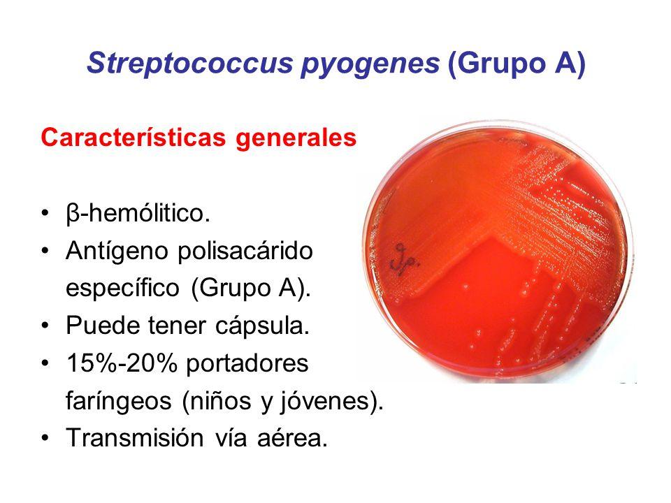 S.agalactiae Grupo B Prevención de la infección neonatal Identificación de gestantes portadoras: –Cultivo exudado vaginorectal 35-37 semanas de gestación.